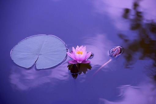 specchio acqua con fiore e riflessi